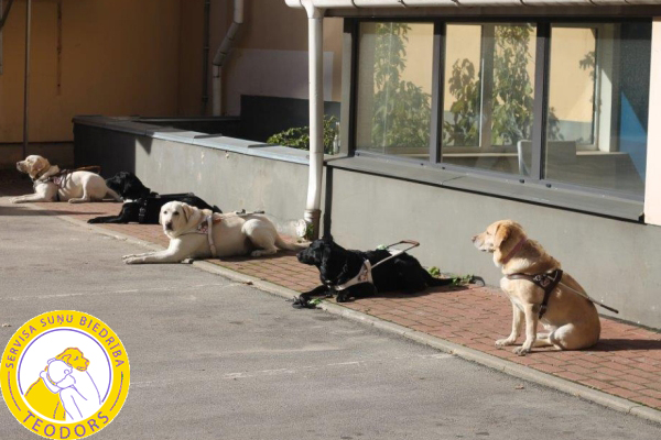 Last exercise: inspection of dogs sleeping without the presence of their masters– Riga  October 2013