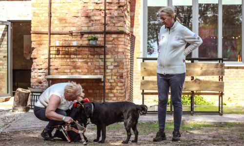 Guide dog Zuze, along with her owner, Lolita, is renewing her collaboration skills