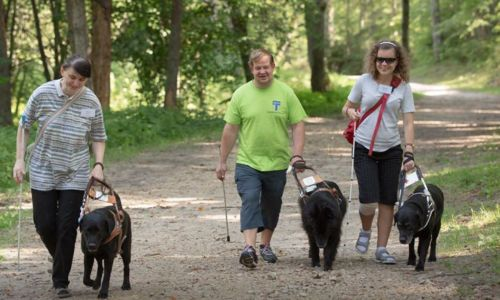 Guide dogs Annekene, Feja, and Zane enjoy a walk in the forest with their owners
