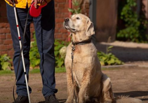 Guide dog Toni focuses on training