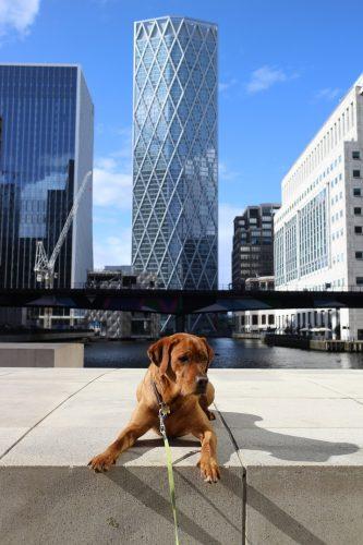 Joko apbrīno Londonu